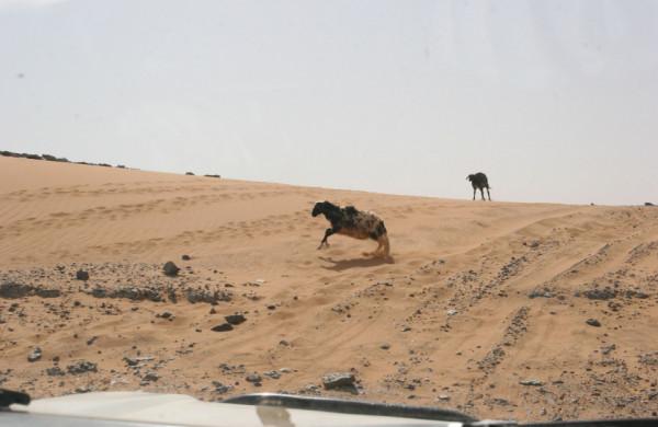 Sahara | Októbrová cesta po Maroku